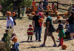 Book Pumpkin Patch Train