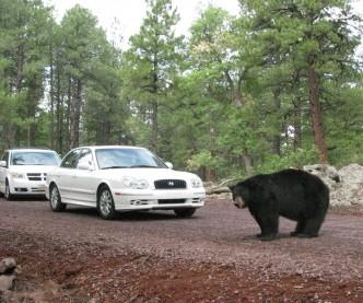 Bearizona Drive-Thru Wildlife Park